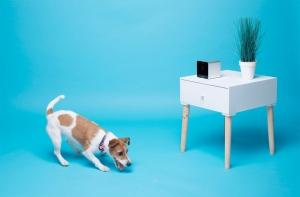 умная камера для животных PetCube